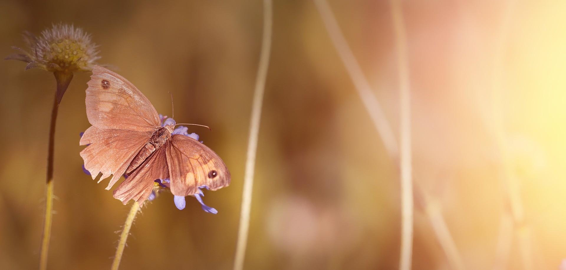 butterfly-1662661_1920